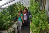 Field Trip Looking a Greenhouse
